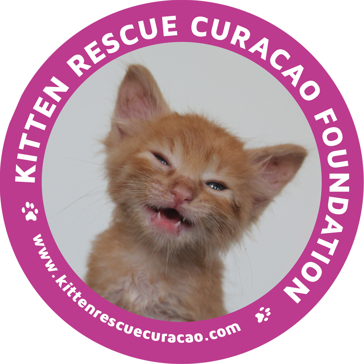 Kitten Rescue Curacao