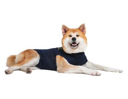 gilet de protection pour chien