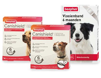 flohhalsband-hund